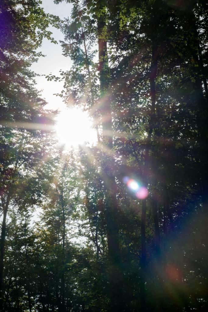 Zdjęcia pod słońce, efekt flary i gwiazdy
