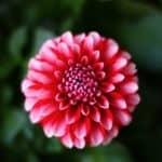 fajne zdjecia kwiatow pomysle na zdjecia w domu
