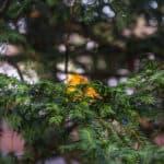 carl zeiss tessar example przykładowe zdjęcie lisc na drzewie