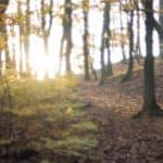 pomysły na zdjęcia jesienią kolory liści