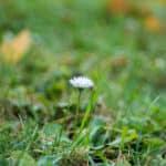 pomysły na zdjęcia jesienią stokrotka łąka