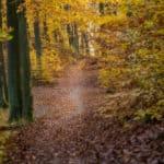 pomysły na zdjęcia jesienią kolory liści szlak park trojmiejski