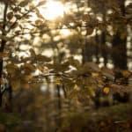 fujifilm 55mm f2.2 jesien 2017 bubble bokeh photos 4