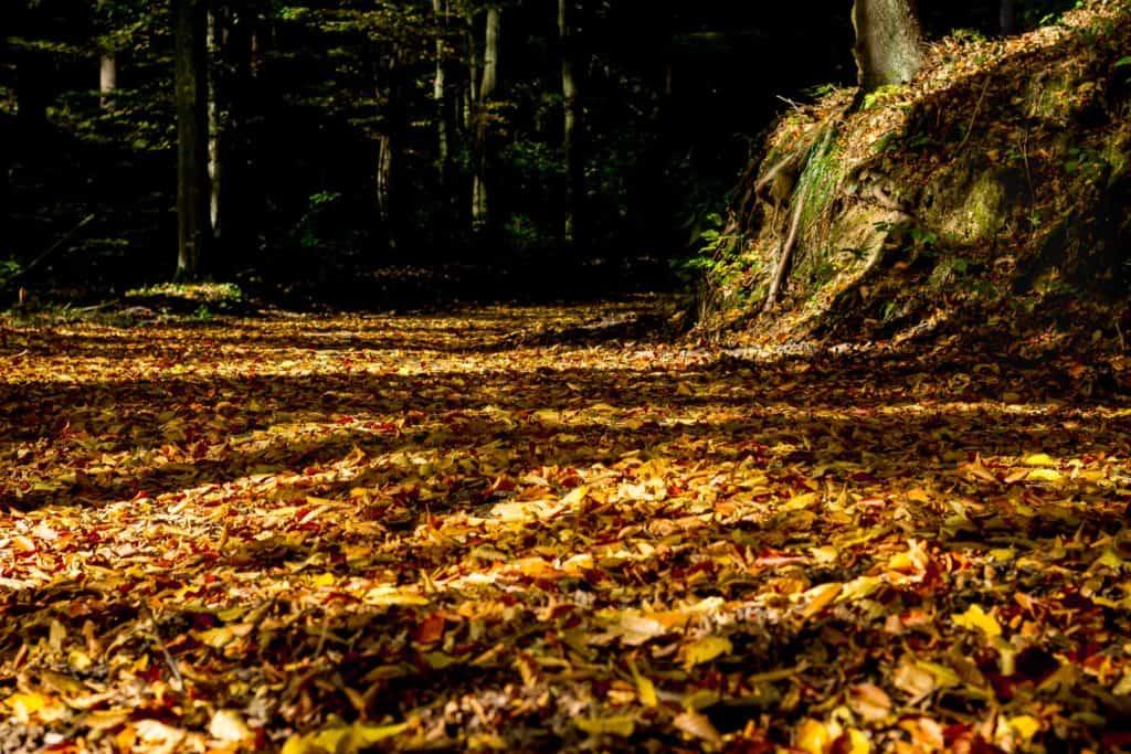 Lasy oliwskie jesień październik 2018 10 1024x683 - Złota godzina w fotografii