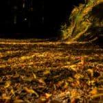 Lasy oliwskie jesień październik 2018 11 150x150 - Jesienne zdjęcia 2018 - Lasy Oliwskie