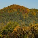 Lasy oliwskie jesień październik 2018 20 150x150 - Jesienne zdjęcia 2018 - Lasy Oliwskie