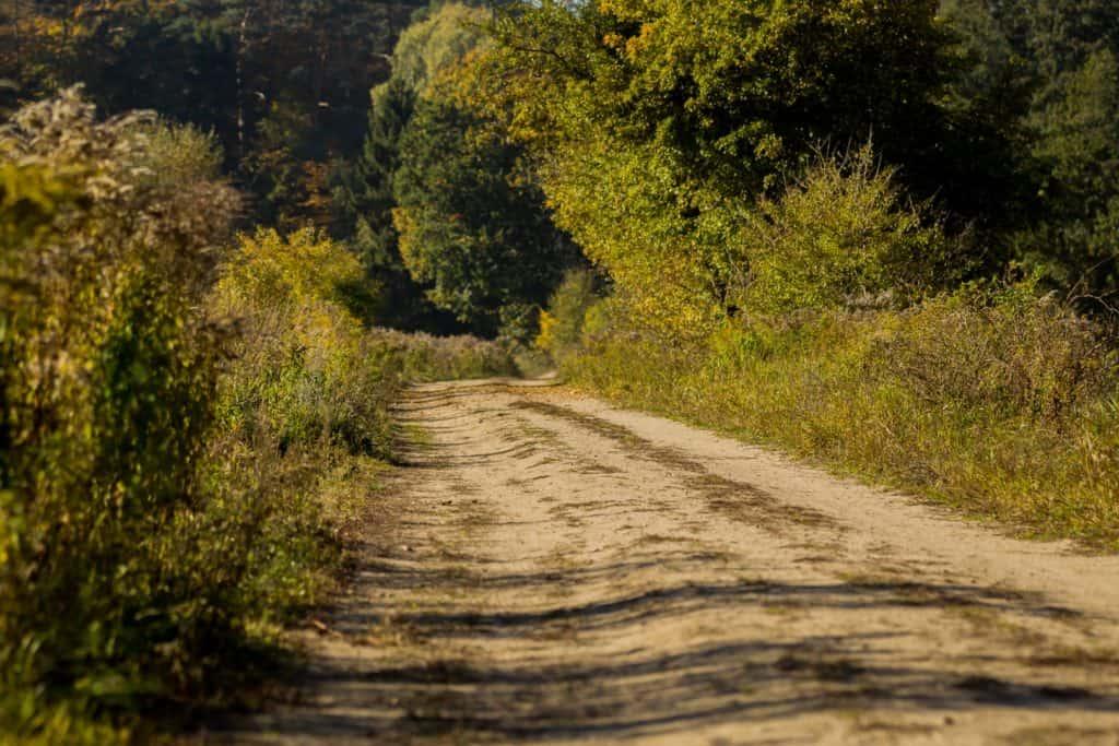 Lasy oliwskie jesień październik 2018 22 1 1024x683 - Kompozycja obrazu fotograficznego