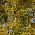 Lasy oliwskie jesień październik 2018 25 1 150x150 - Jesienne zdjęcia 2018 - Lasy Oliwskie