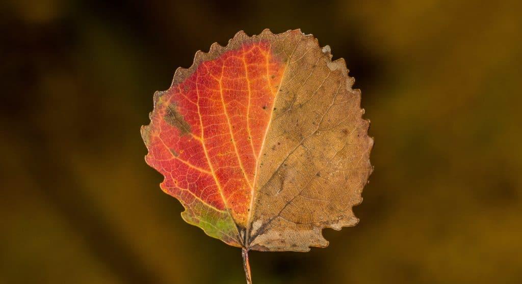 Wyzwanie fotograficzne 7 dni dzień pierwszy czerwony liść