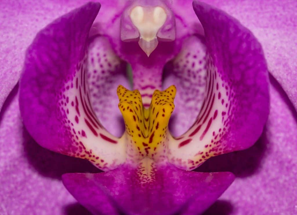 Wyzwanie fotograficzne 7 dni dzień trzeci makro fotografia abstrakcja kwiat 1