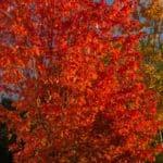jesień październik 10 150x150 - Jesienne zdjęcia 2018 - Lasy Oliwskie