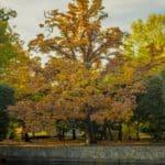 jesień październik 13 150x150 - Jesienne zdjęcia 2018 - Lasy Oliwskie