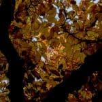 jesień październik 14 150x150 - Jesienne zdjęcia 2018 - Lasy Oliwskie