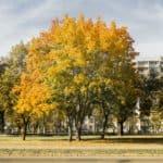 jesień październik 3 150x150 - Jesienne zdjęcia 2018 - Lasy Oliwskie