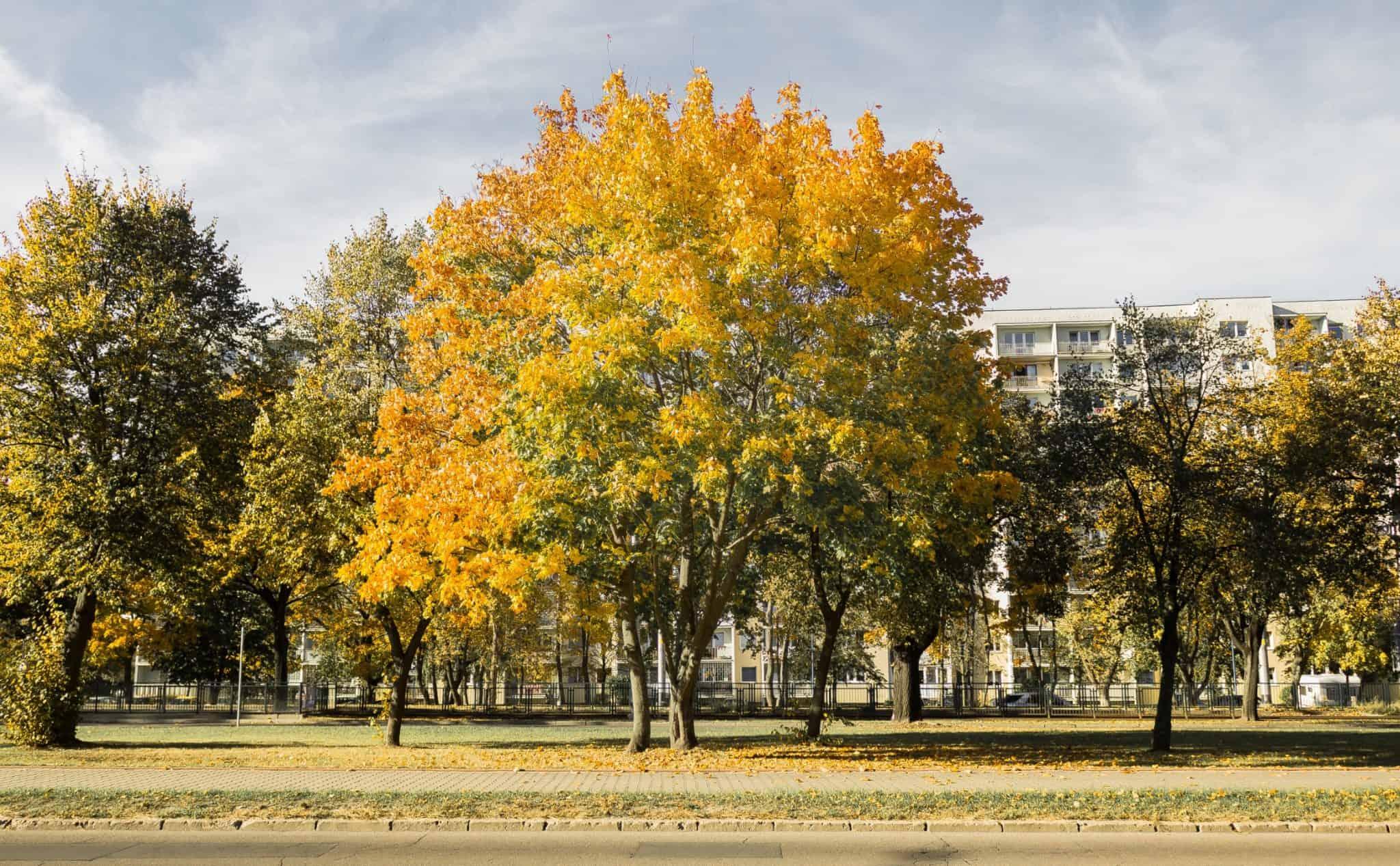 jesienn zdjęcia 2018 gdańsk oliwa lasy oliwskie
