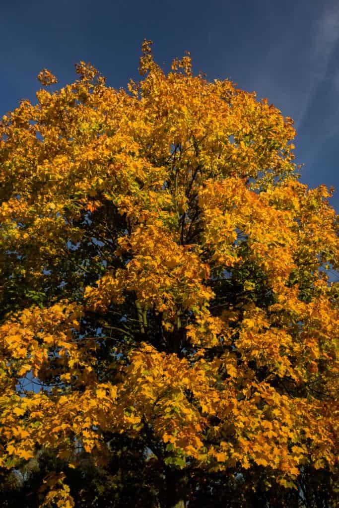 jesień październik 4 683x1024 - Złota godzina w fotografii