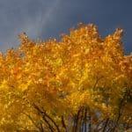 jesień październik 7 150x150 - Jesienne zdjęcia 2018 - Lasy Oliwskie