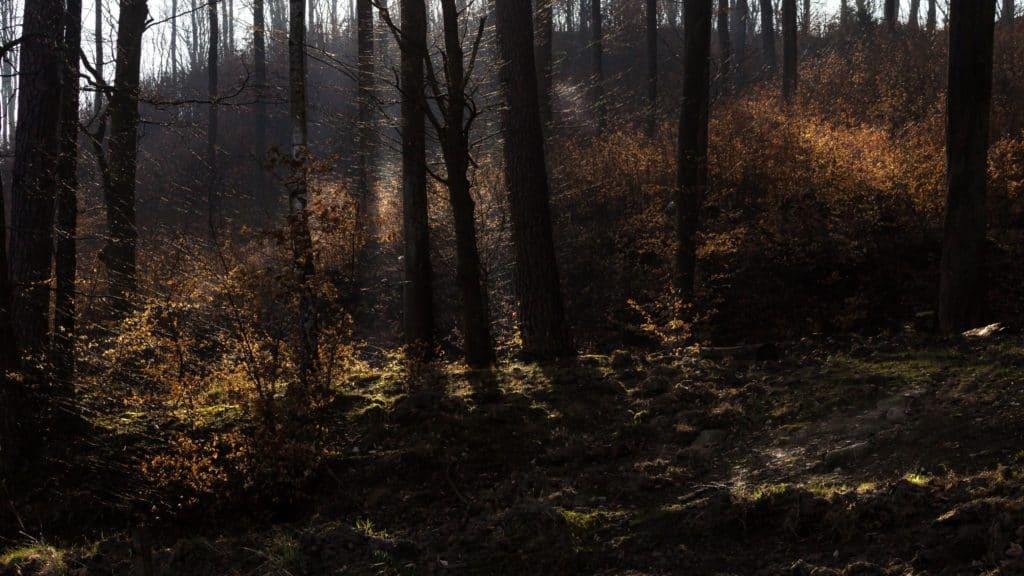 Fotografia przyrodnicza Lasy Oliwskie Wiosna 2019 16x9 1024x576 - Fotografia w lesie oraz makrofotografia natury