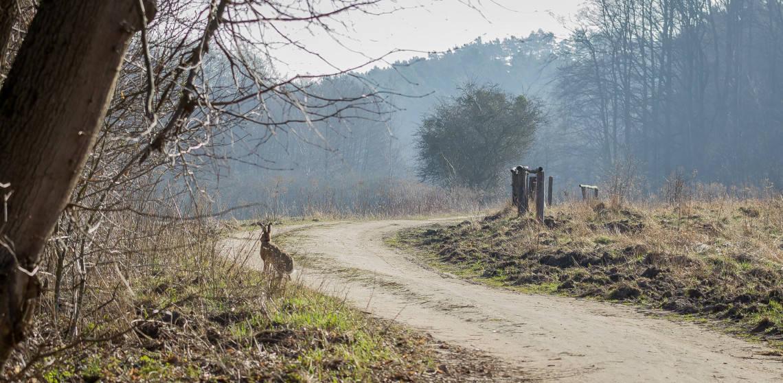 Fotografia przyrodnicza Lasy Oliwskie Wiosna 2019-24