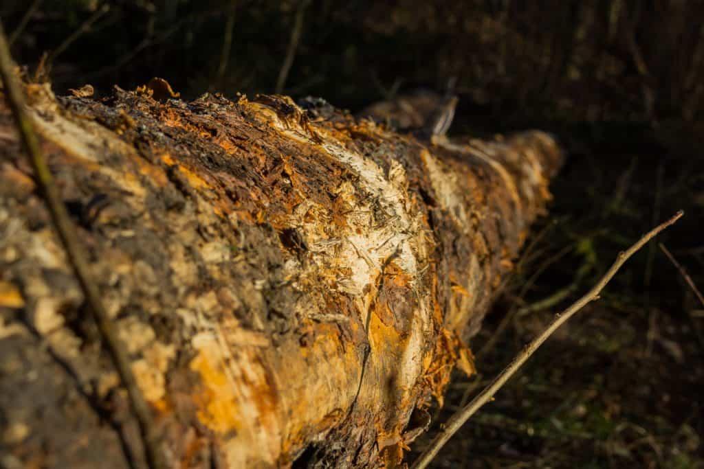 Fotografia przyrodnicza Lasy Oliwskie Wiosna 2019 3 1024x683 - Fotografia w lesie oraz makrofotografia natury