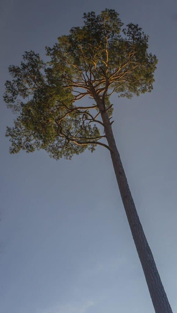 Fotografia przyrodnicza Lasy Oliwskie Wiosna 2019 7 580x1024 - Fotografia w lesie oraz makrofotografia natury