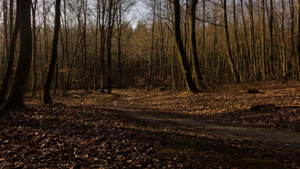 Fotografia w lesie przyrodnicza Lasy Oliwskie Wiosna 2019-8