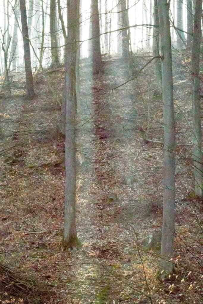 Fotografia przyrodnicza Lasy Oliwskie Wiosna 2019 ISO 6400 przykład 683x1024 - Podstawy fotografii cyfrowej - 2020 aktualizacja