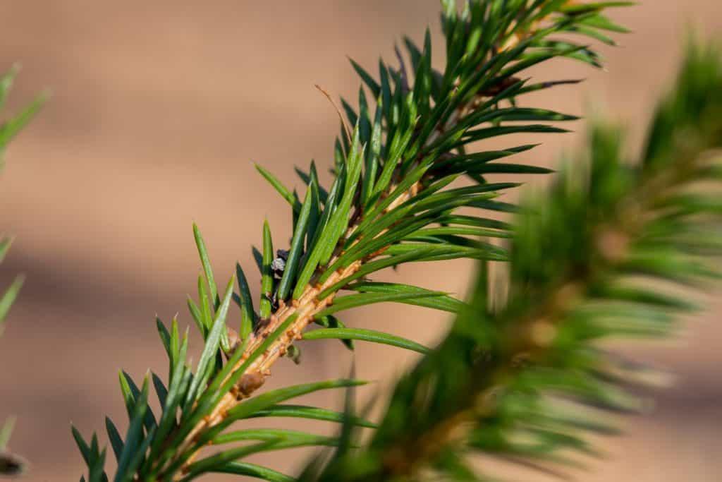 Fotografia w lesie obiektyw tamron 90 macro