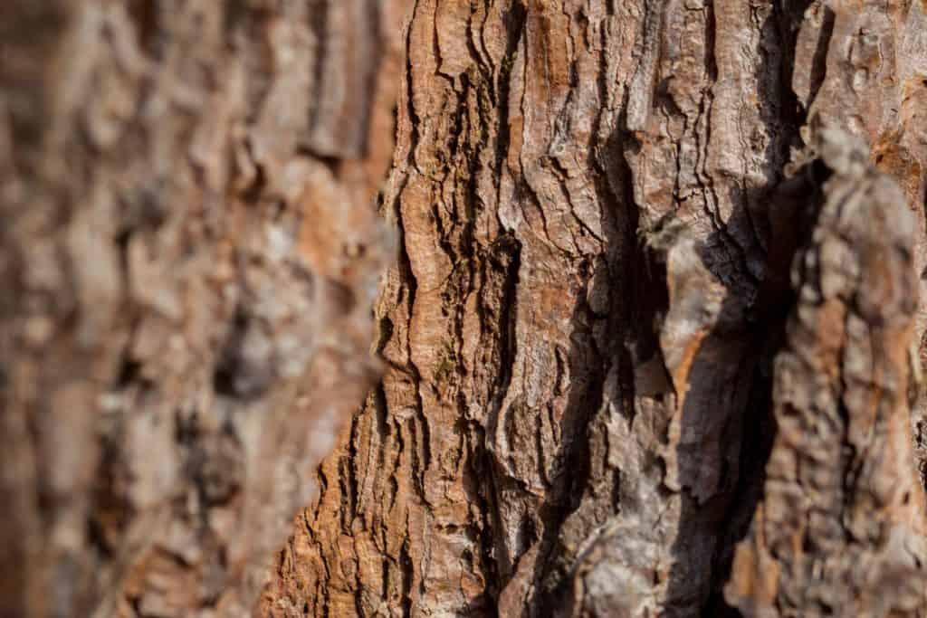Fotografia przyrodnicza makrofotografia tamron 90 Lasy Oliwskie Wiosna 2019 kora  1024x683 - Fotografia w lesie oraz makrofotografia natury