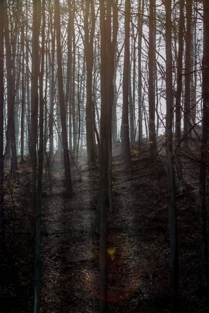 Jak fotografować promienie słoneczne w lesie 683x1024 - Fotografia w lesie oraz makrofotografia natury