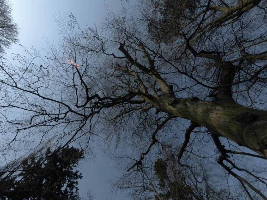 xiaoyi yi 4k przykładowe zdjęcie drzewa 1024x768 - Zdjęcia z kamerki sportowej Xiaomi