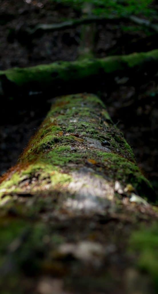 Jak znaleźć kadr w lesie 10 553x1024 - Jak znaleźć kadr w lesie - ćwiczenie oka