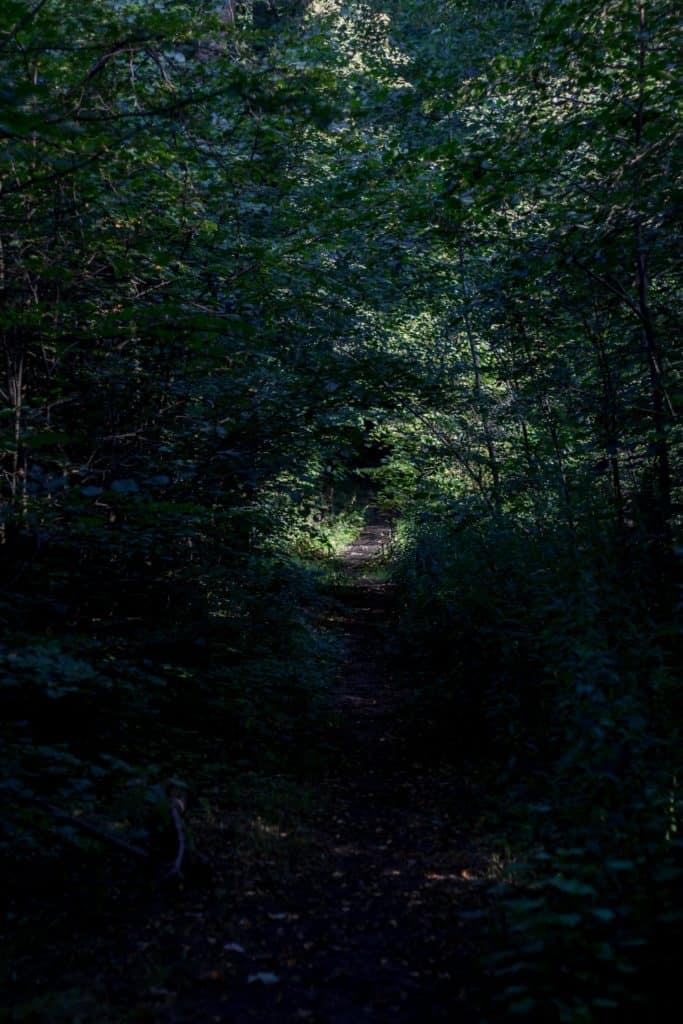 Jak znaleźć kadr w lesie 2 683x1024 - Jak znaleźć kadr w lesie - ćwiczenie oka