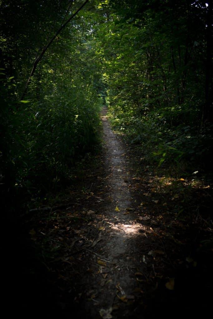 Jak znaleźć kadr w lesie 25 683x1024 - Jak znaleźć kadr w lesie - ćwiczenie oka