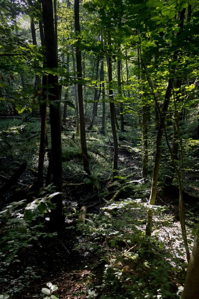 jak znaleźć kadr w lesie