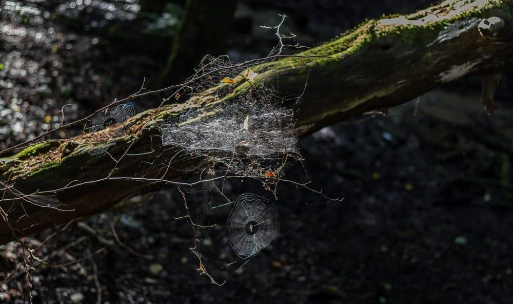 jak znaleźć kadr w lesie pajęczyny nad skarpą - Jak znaleźć kadr w lesie - ćwiczenie oka