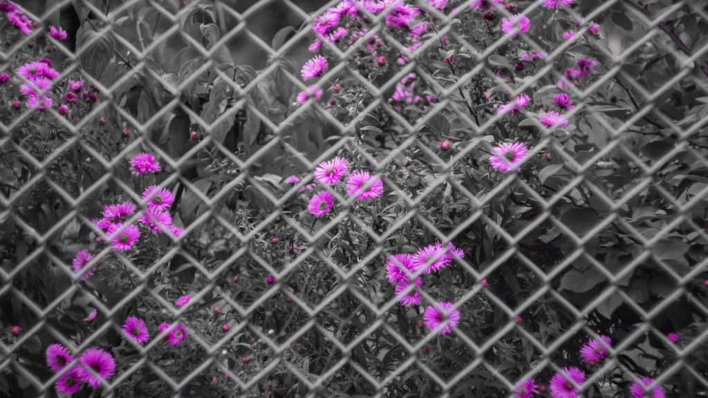 Fotografia z jednym kolorem przykłady zastosowania barw-8