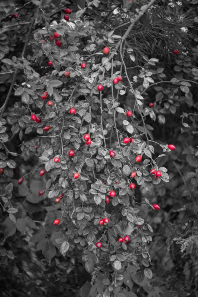 Fotografia z jednym kolorem przykłady zastosowania barw 9 683x1024 - Fotografia z jednym kolorem