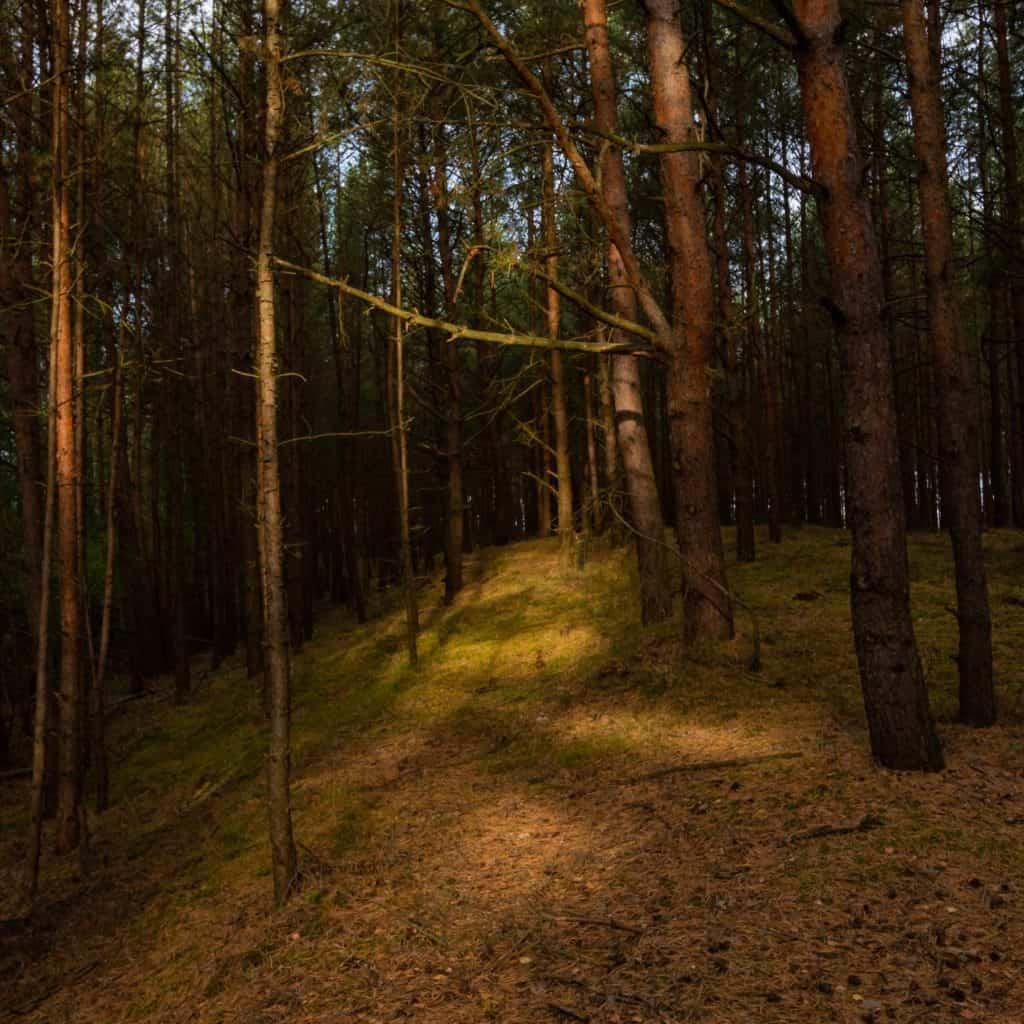 Wyspa Sobieszewska Mewia Łacha las o złotej godzinie