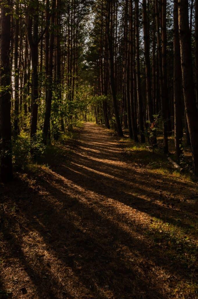 Wyspa Sobieszewska Ptasi Raj las o złotej godzinie