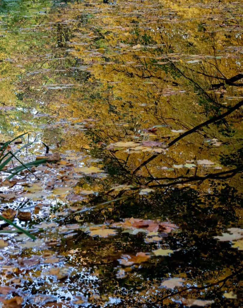 Fotografia lustrzana i odbicia jesień w parku oliwskim w Gdańsku 11 808x1024 - Fotografia lustrzana i odbicia