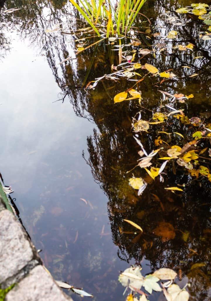 Fotografia lustrzana i odbicia jesień w parku oliwskim w Gdańsku 3 721x1024 - Fotografia lustrzana i odbicia
