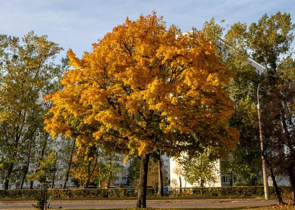 Jesienne drzewa fotografia natury i lasu 1 1024x729 - Złota godzina w fotografii