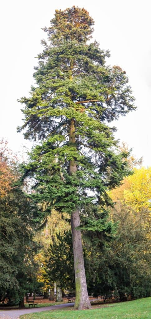 Jesienne drzewa fotografia natury i lasu 13 485x1024 - Złota godzina w fotografii