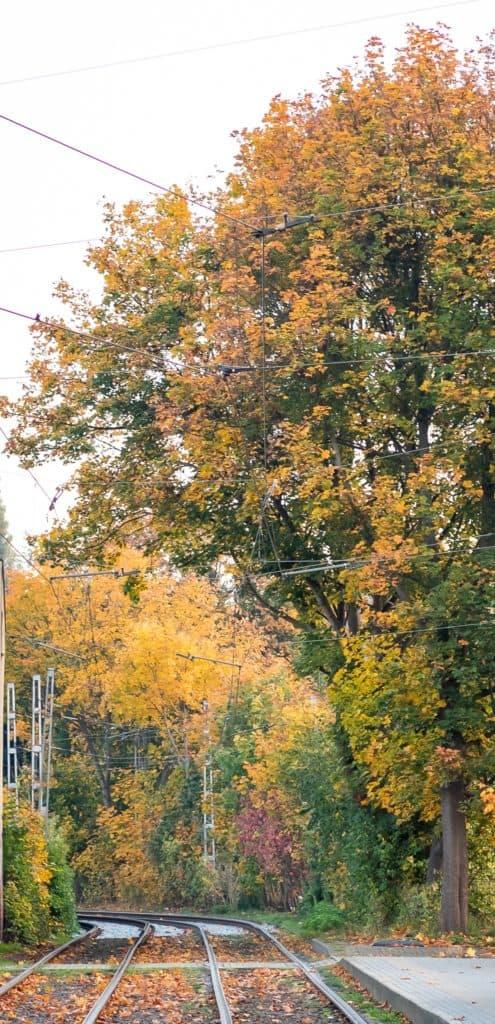 Jesienne drzewa fotografia natury i lasu 16 495x1024 - Złota godzina w fotografii