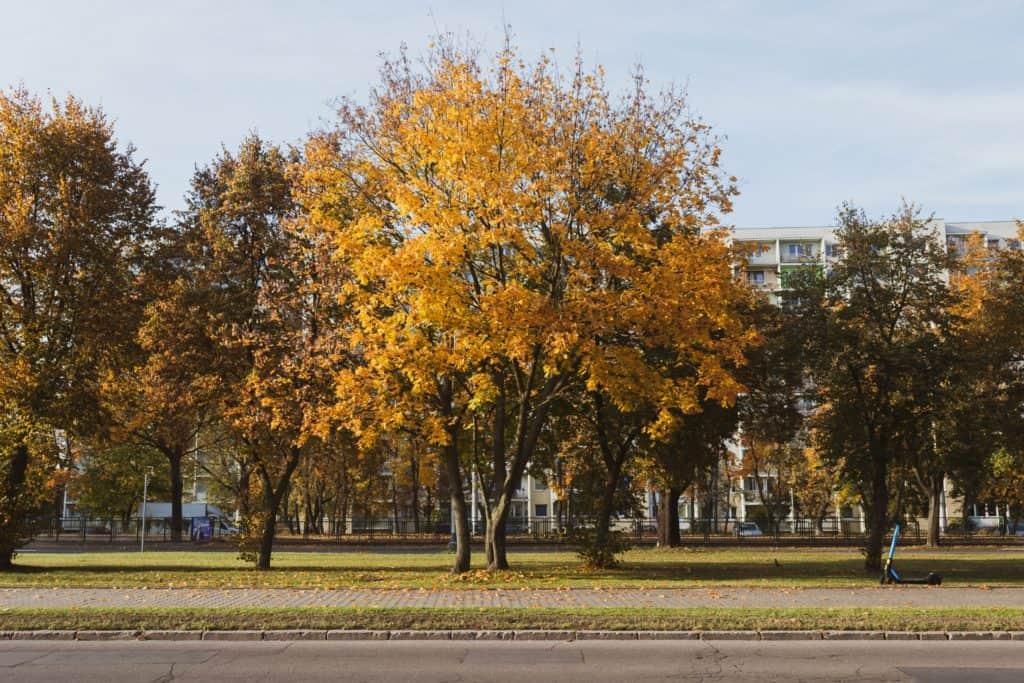 Jesienne drzewa fotografia natury i lasu 3 1024x683 - Krajobraz jesienny - Gdańska jesień