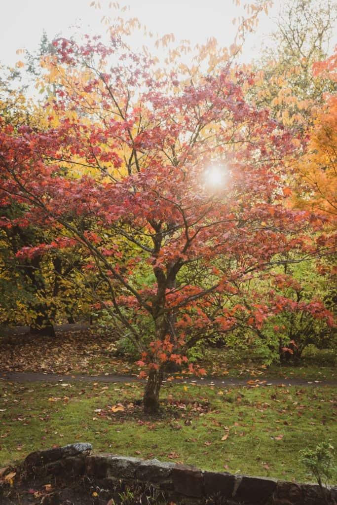 Jesienne drzewa fotografia natury i lasu 7 683x1024 - Złota godzina w fotografii