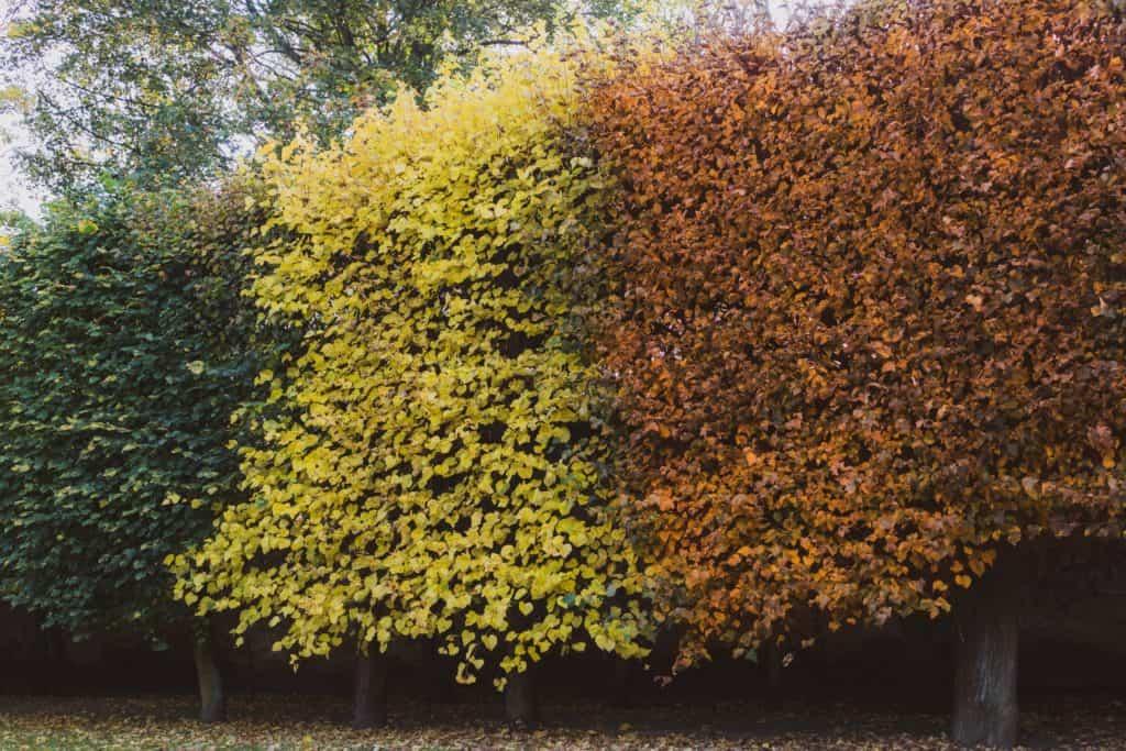 Jesienne drzewa fotografia natury i lasu 9 1024x683 - Krajobraz jesienny - Gdańska jesień
