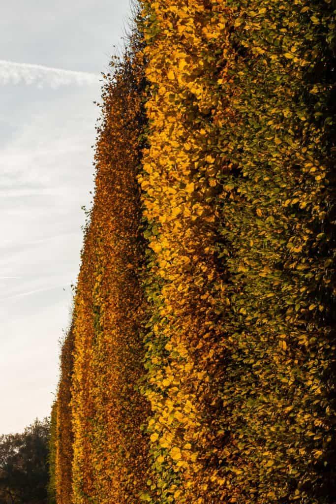 Krajobraz jesieni 6 683x1024 - Złota godzina w fotografii