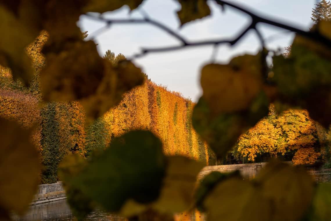 Złota godzina w fotografii - jesienne drzewa w krajobrazie jesiennym - kompozycja ramy